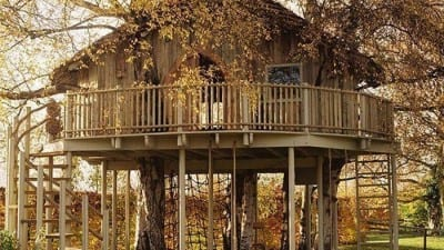 tree house building